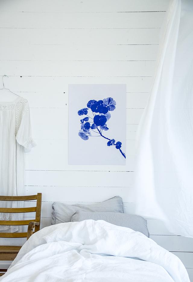 BLUE PELARGOS-presse